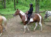 Wrangle & Ride - Full