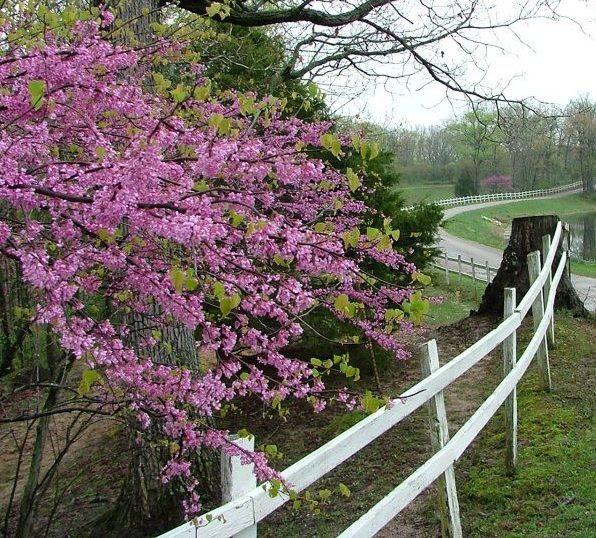 Spring at DuBois