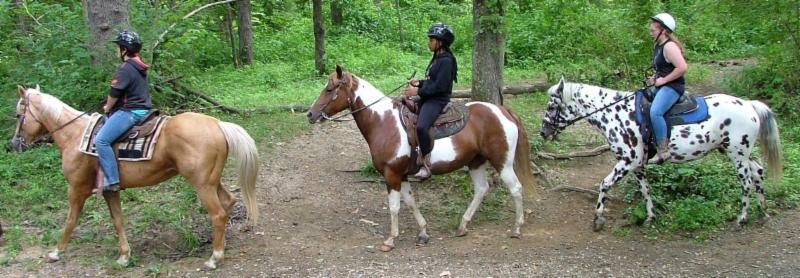 Wrangle and Ride
