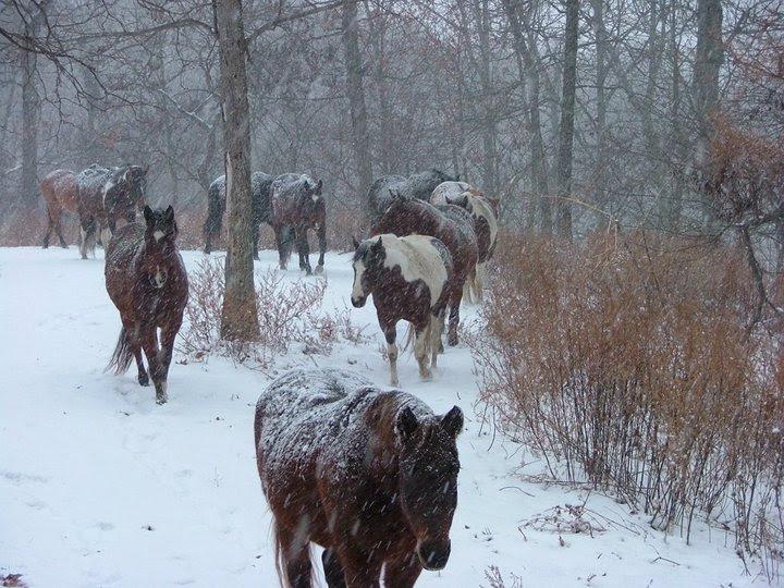 fuzzy ponies