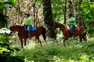 Horse Camp 2