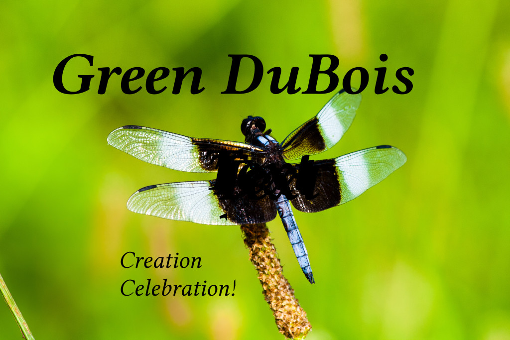 Dragonfly Logo Banner
