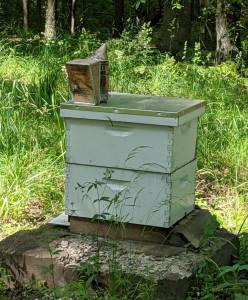 Hive Happenings2