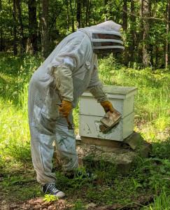 Hive Happenings3
